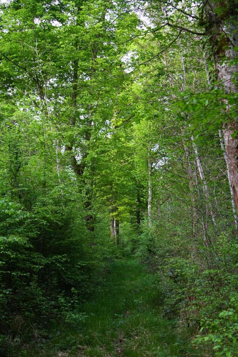 [fil ouvert] la forêt dans tous ses états - Page 5 Img_2648