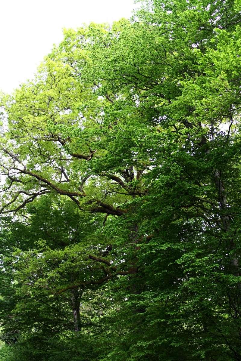 [fil ouvert] la forêt dans tous ses états - Page 5 Img_2649