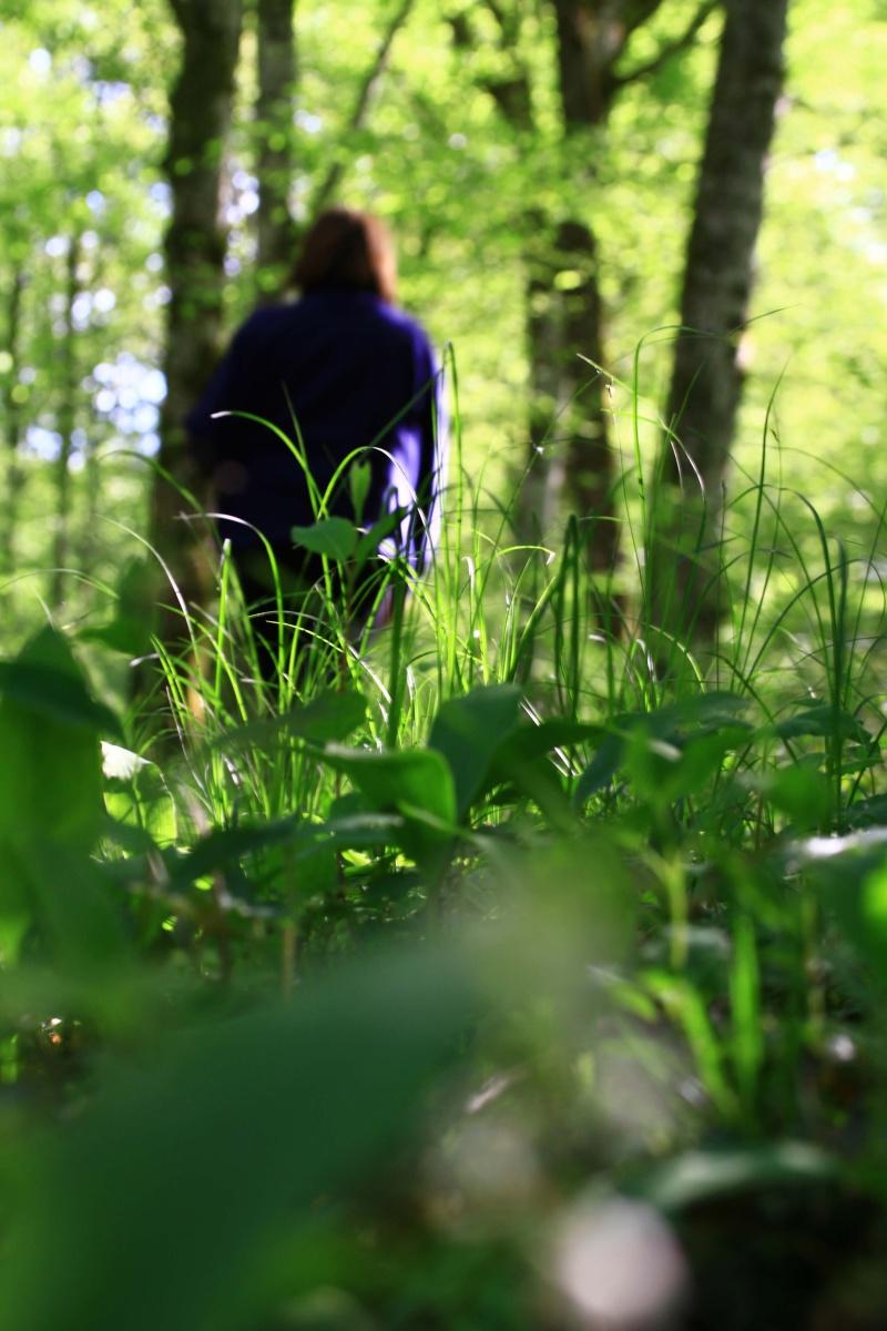 [fil ouvert] la forêt dans tous ses états Img_3415