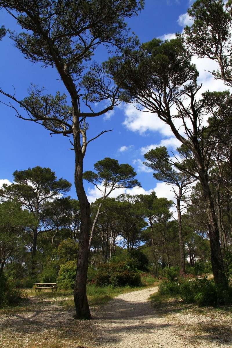 [fil ouvert] la forêt dans tous ses états - Page 3 Img_3812