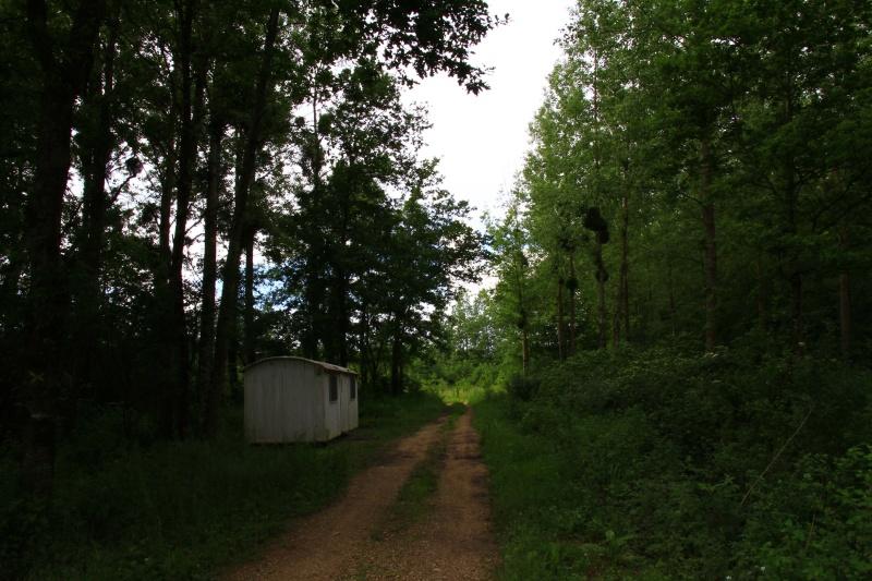 [fil ouvert] la forêt dans tous ses états - Page 5 Img_4241