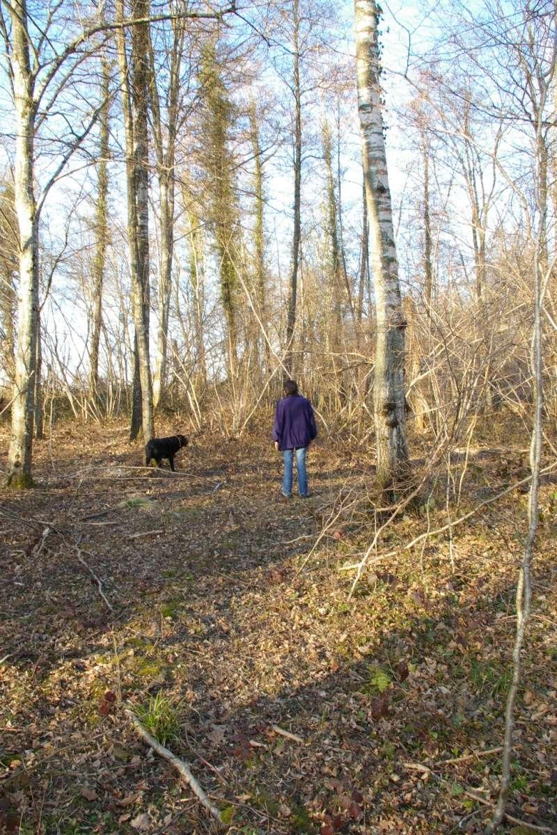 [fil ouvert] la forêt dans tous ses états - Page 5 Imgp2211