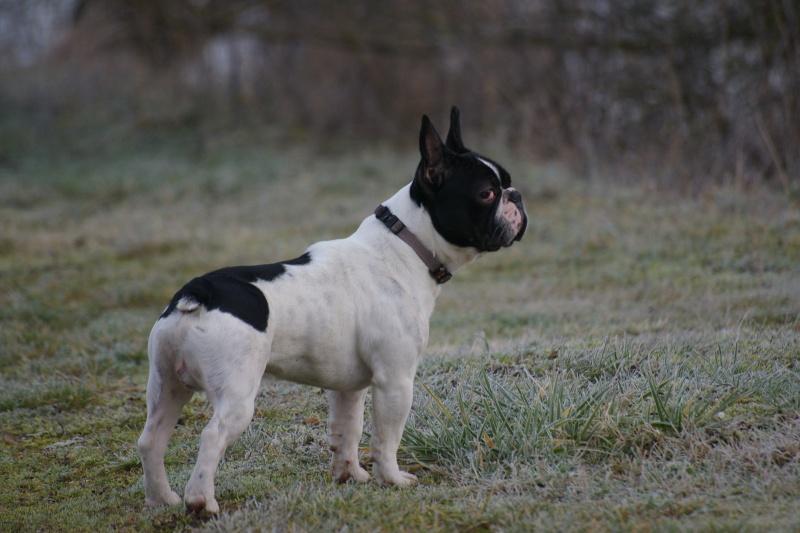 [fil ouvert] Les chiens, nos amis Imgp9211