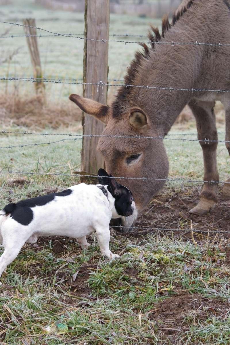 [fil ouvert] Les chiens, nos amis Imgp9213