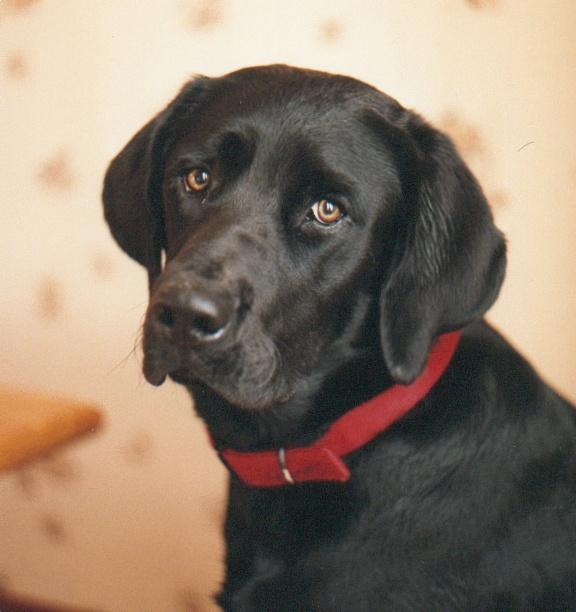 [fil ouvert] Les chiens, nos amis Photos10