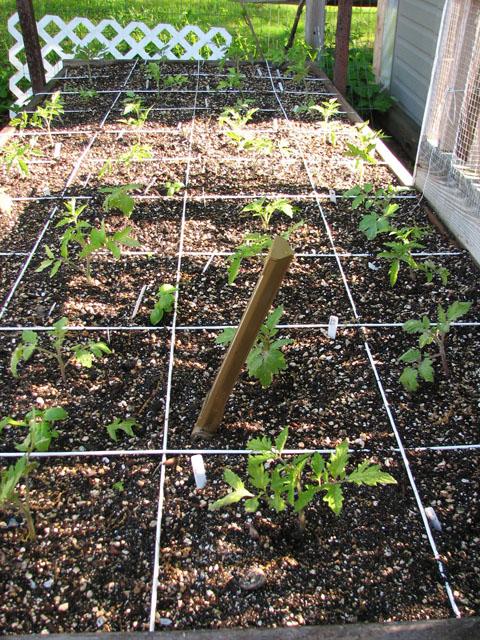 tomato canopy 415