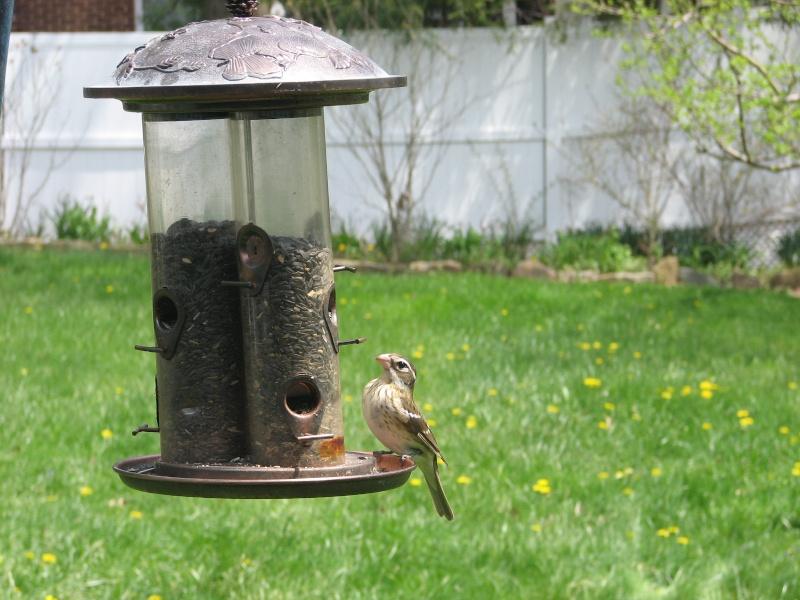 Birdwatching Misc2_10