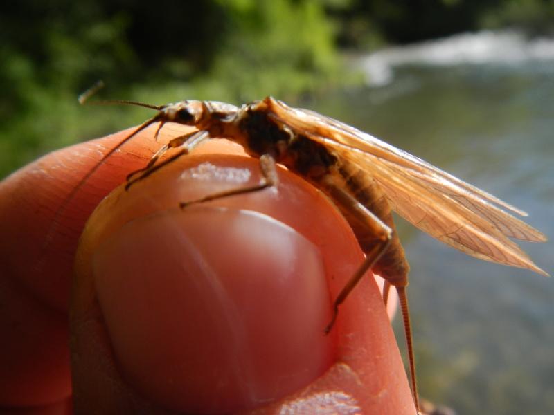 Photos d'insectes  - Page 8 Dscn1730