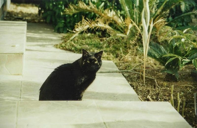Le royaume des chats Photo_11