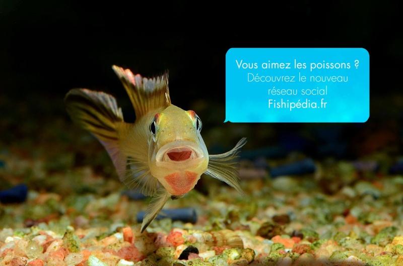 Fishipedia Visuel10