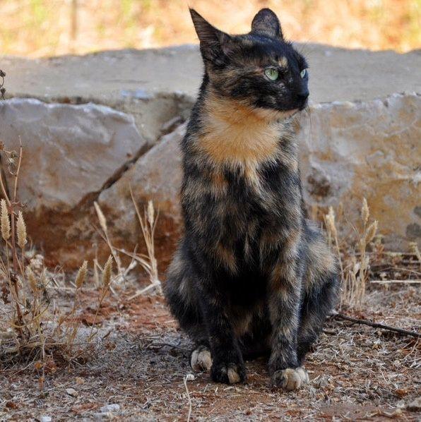 Cait's Kitty Profiles Photo_11