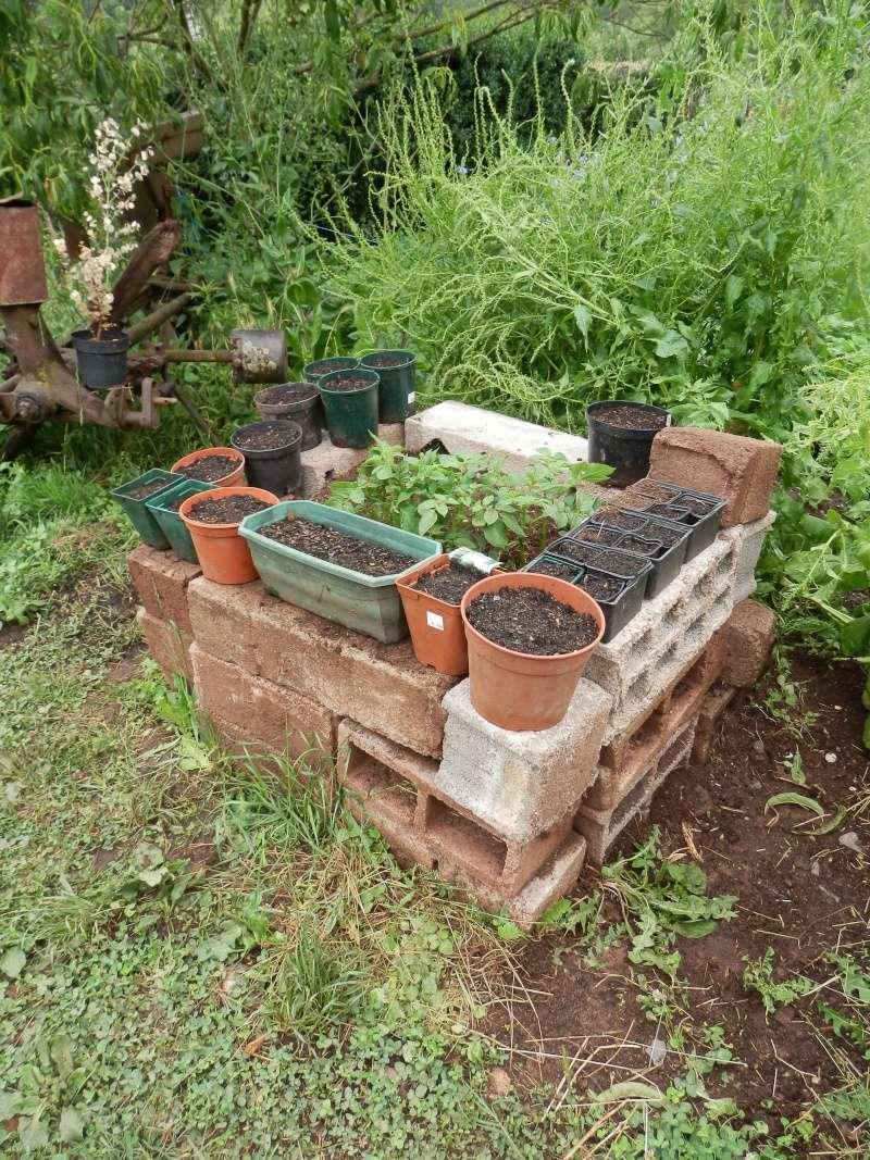 [agri.] Cultiver des patates sur son balcon - Page 2 Potage11