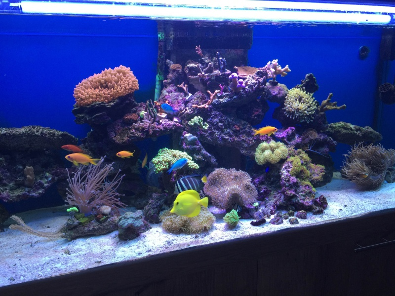 Mon 450L Reef - Page 2 Img_1911