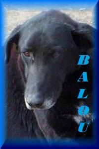 FERMETURE REFUGE DE BACKA   - Page 2 Balou10