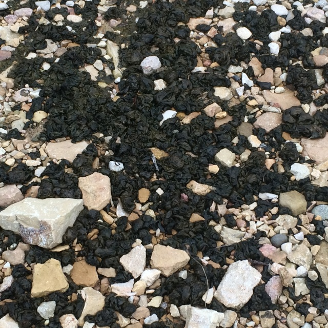 comment se débarasser des algues dans la cour? Img_1111