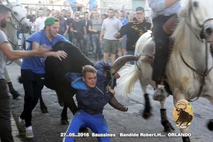 27..05..2016..Saussines...   BANDIDE _mg_0059