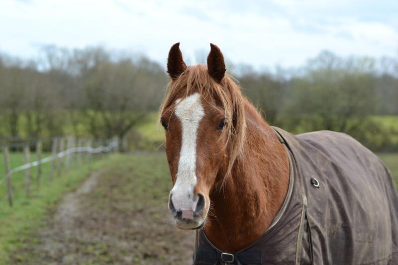 Heldon, PSAR ataxique, un cheval que l'on vouvoie Dsc_0314