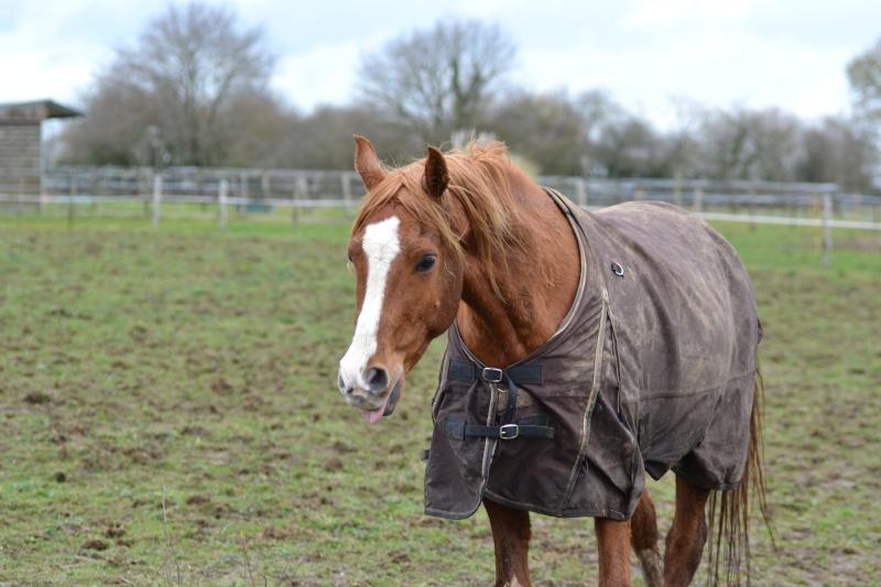 Heldon, PSAR ataxique, un cheval que l'on vouvoie Dsc_0315
