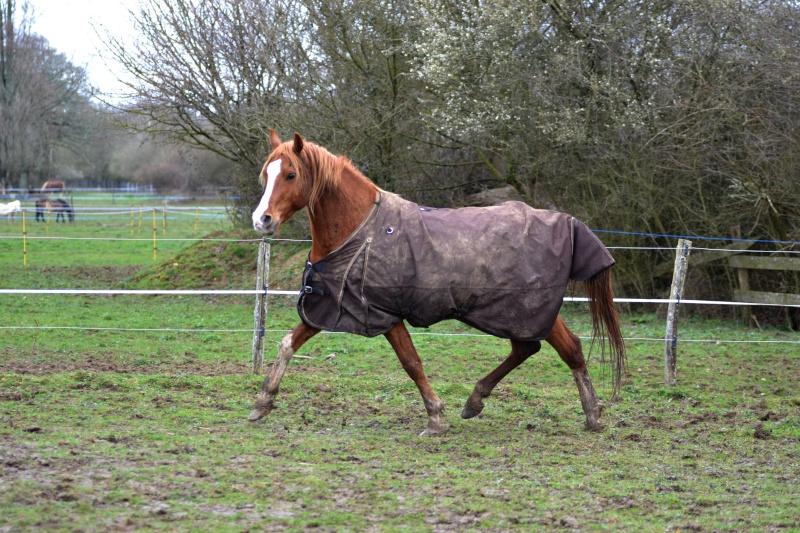 Heldon, PSAR ataxique, un cheval que l'on vouvoie Dsc_0316