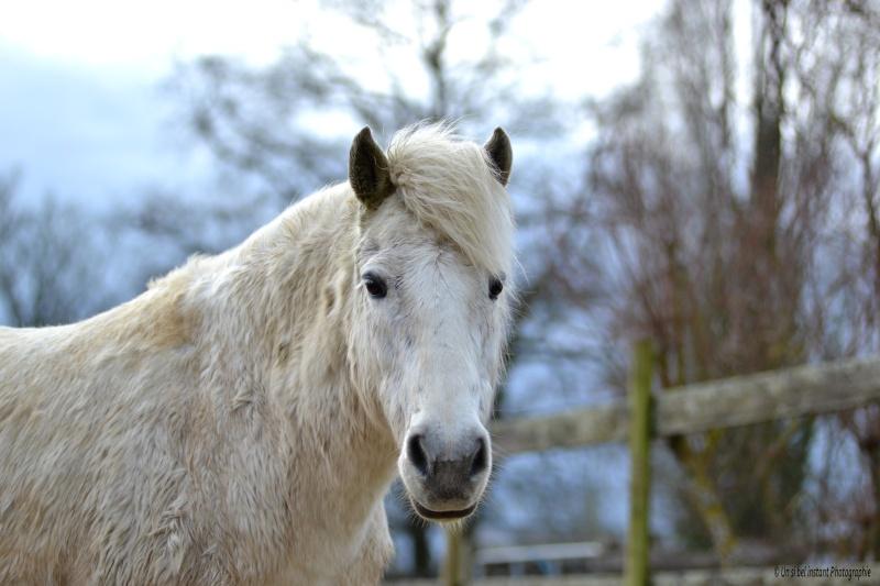 Machu, ancien poney de club Dsc_0516