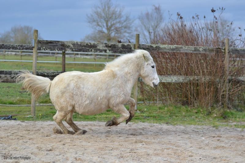 Machu, ancien poney de club Dsc_0517