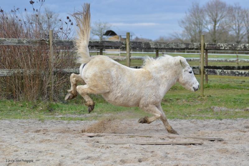 Machu, ancien poney de club Dsc_0518