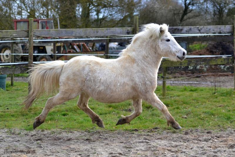 Machu, ancien poney de club Dsc_0519