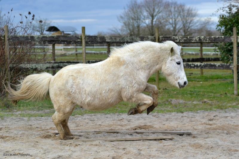 Machu, ancien poney de club Dsc_0520