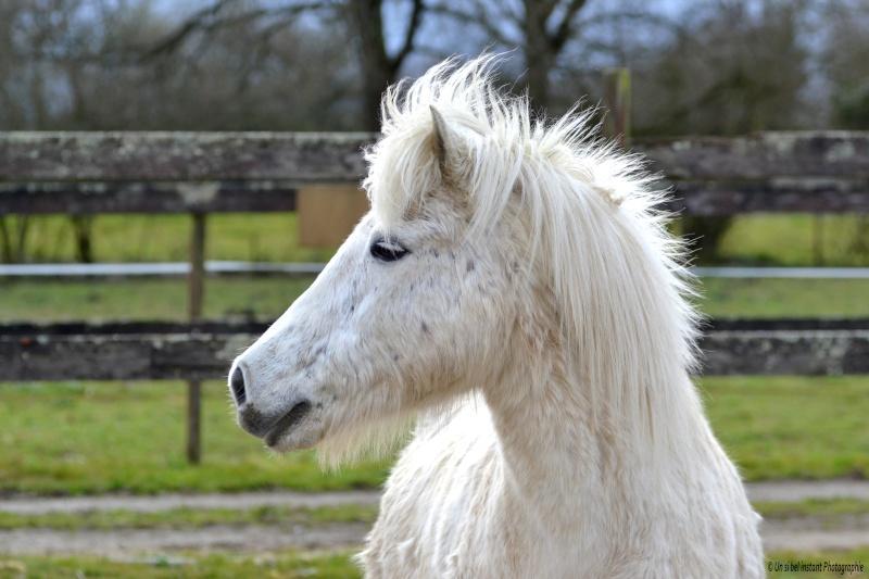 Machu, ancien poney de club Dsc_0614