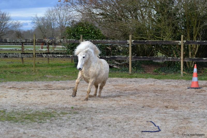 Machu, ancien poney de club Dsc_0615