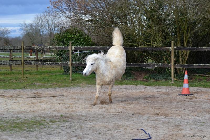 Machu, ancien poney de club Dsc_0616
