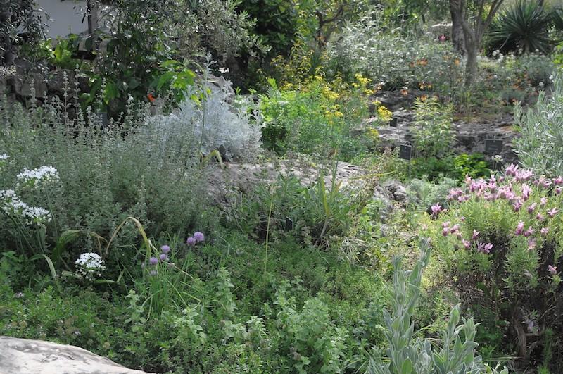 joli mois de mai, le jardin fait à son gré - Page 2 Copia_11