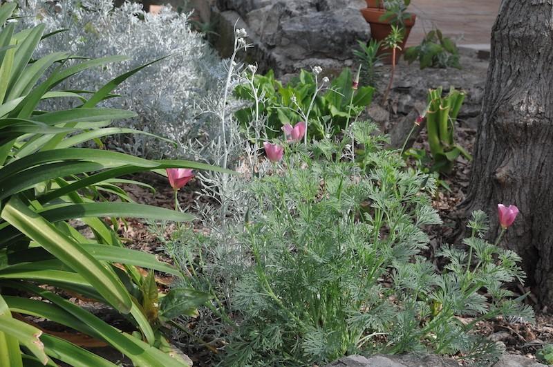 joli mois de mai, le jardin fait à son gré - Page 2 Copia_13