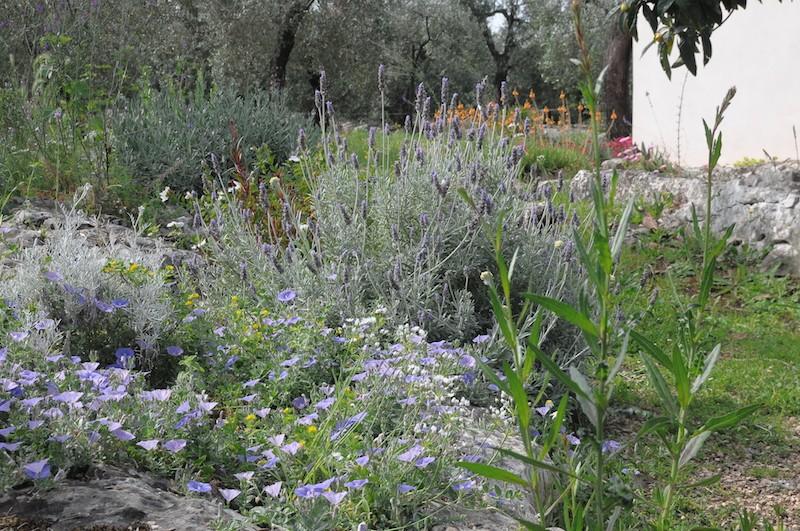 joli mois de mai, le jardin fait à son gré - Page 2 Copia_15