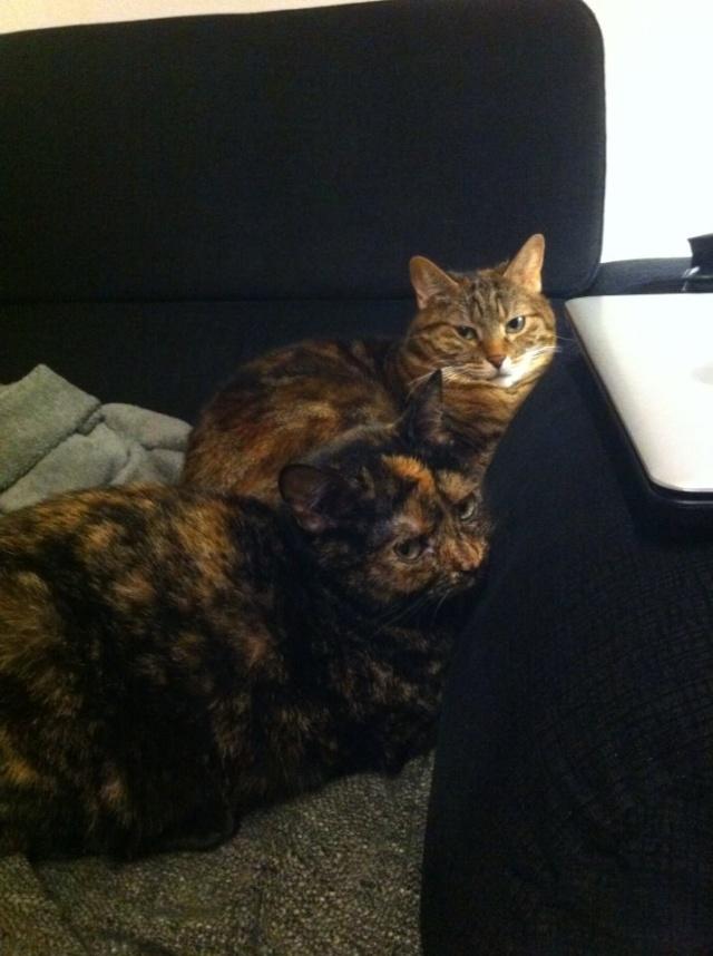 MYSTIQUE (ex-ONDINE) - chatte femelle, née 2014 - (PASCANI) - adoptée par Emilie B. (dpt 69) - Page 4 10320510