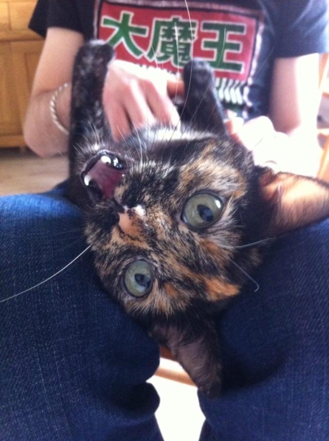 MYSTIQUE (ex-ONDINE) - chatte femelle, née 2014 - (PASCANI) - adoptée par Emilie B. (dpt 69) - Page 4 12670510