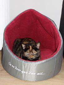 MYSTIQUE (ex-ONDINE) - chatte femelle, née 2014 - (PASCANI) - adoptée par Emilie B. (dpt 69) - Page 4 12717810