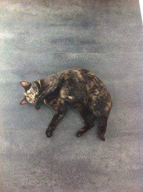 MYSTIQUE (ex-ONDINE) - chatte femelle, née 2014 - (PASCANI) - adoptée par Emilie B. (dpt 69) - Page 4 12963810