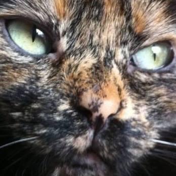 MYSTIQUE (ex-ONDINE) - chatte femelle, née 2014 - (PASCANI) - adoptée par Emilie B. (dpt 69) - Page 4 12985610