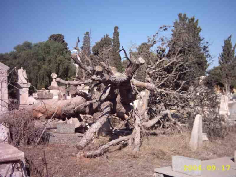 CIMETIERES EN ALGERIE Cimeti14