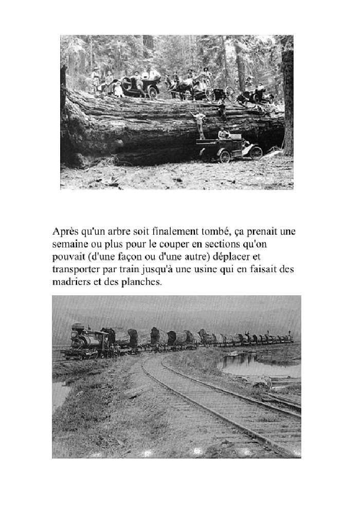 SCIAGE DU BOIS A L'ECHELLE U.S, années 20 Sciage12