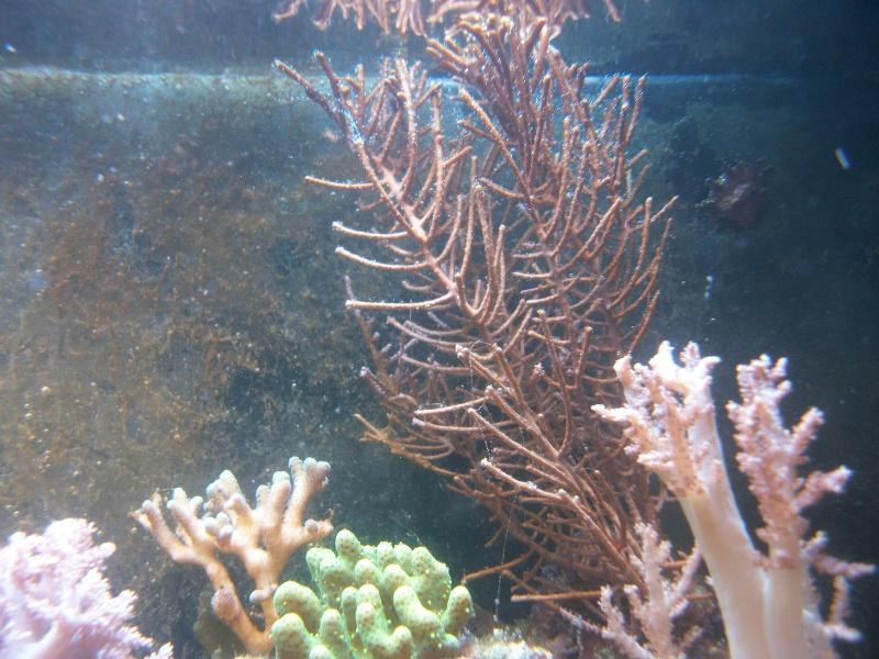 Algues brunes Imgp0010