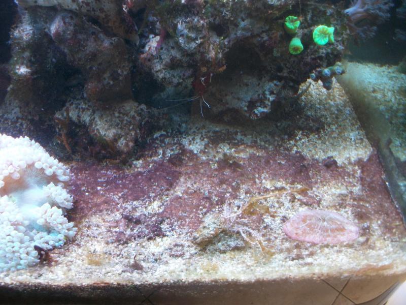 Algues brunes Imgp0012