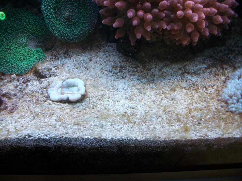 Algues brunes Imgp0013