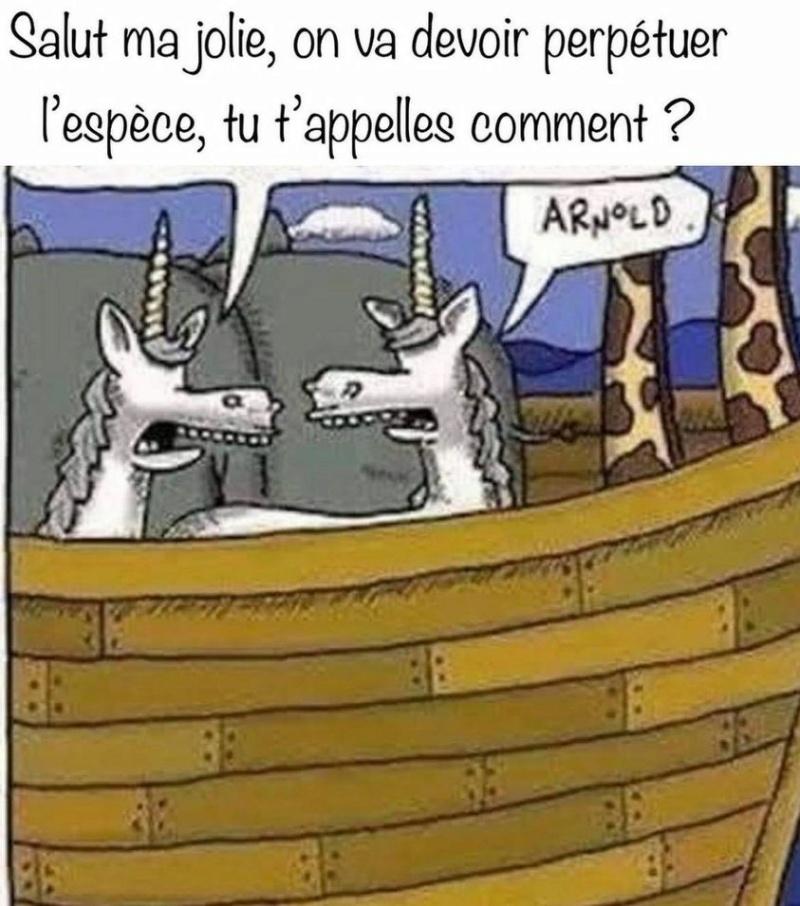 Humour du jour - Page 36 Arnold10