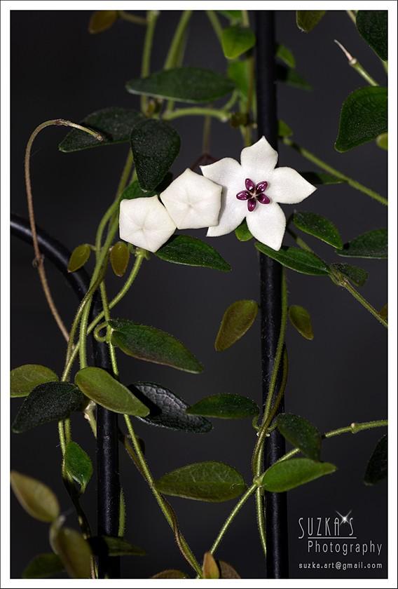 Blüten 2016 - Seite 3 Pk3b0510