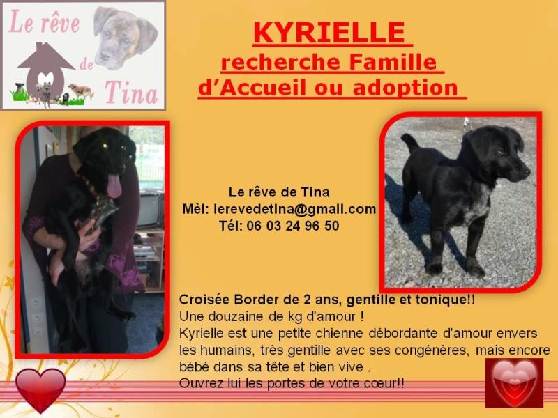 KYRIELLE, croisée Border de 2 ans, gentille et tonique Kyriel11