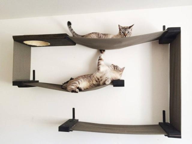 Idées et astuces pour Chiens et chats! - Page 2 12803110