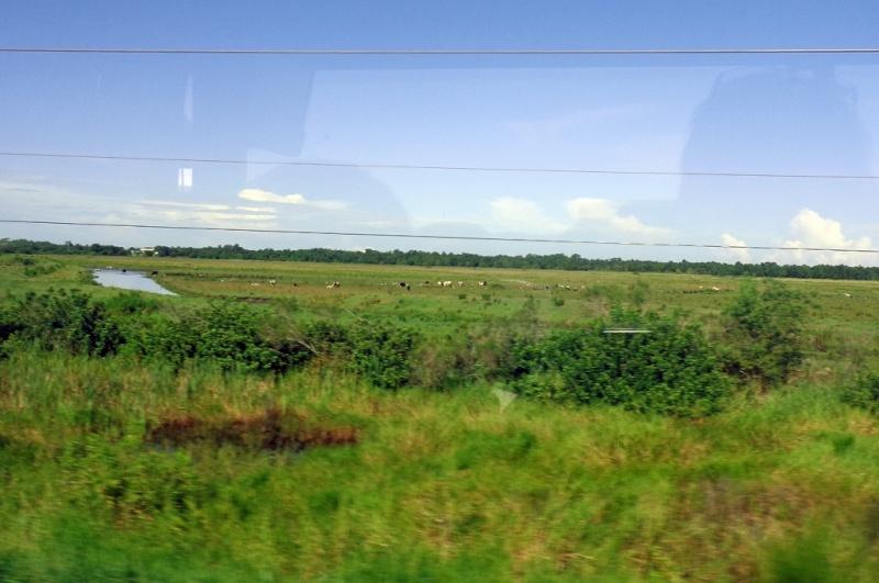 Orlando 2.0 et DCL 1.0 : Nouveau TR d'un vieux et néanmoins fabuleux séjour (aout 2014) - Page 3 2510