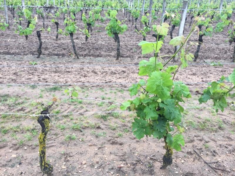protection anti gel vigne par aspersion  Image28